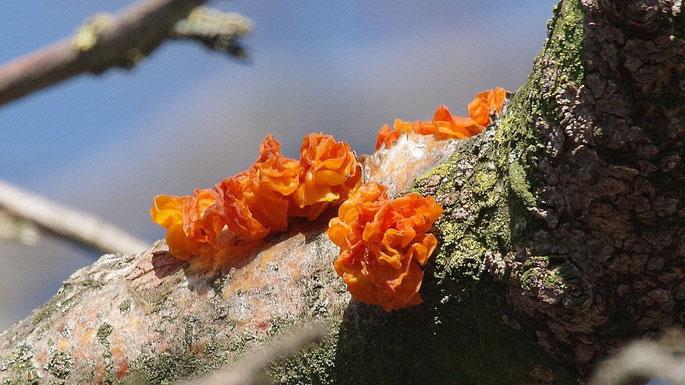 Baumpilze in Orange - Wunder der Natur @wandelsinn