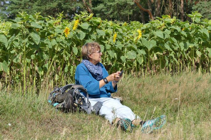 Sonnenblumen in Mecklenburg ©wandelsinn