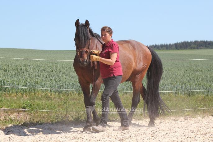 Fürhtraining, Horesmanship, Im Sinne des Pferdes