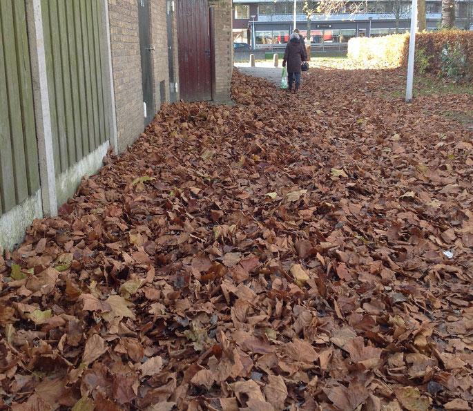 Het wandelpad is bedolven onder een dikke laag bladeren bij obs 't Kofschip locatie de Wielen