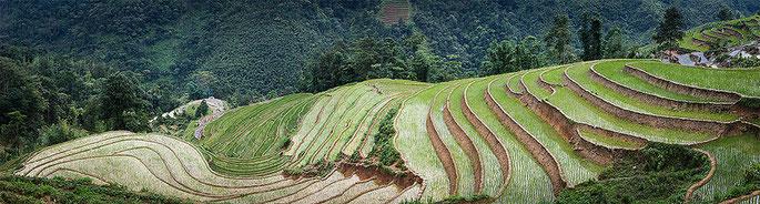 Plantaciones de arroz en Sapa
