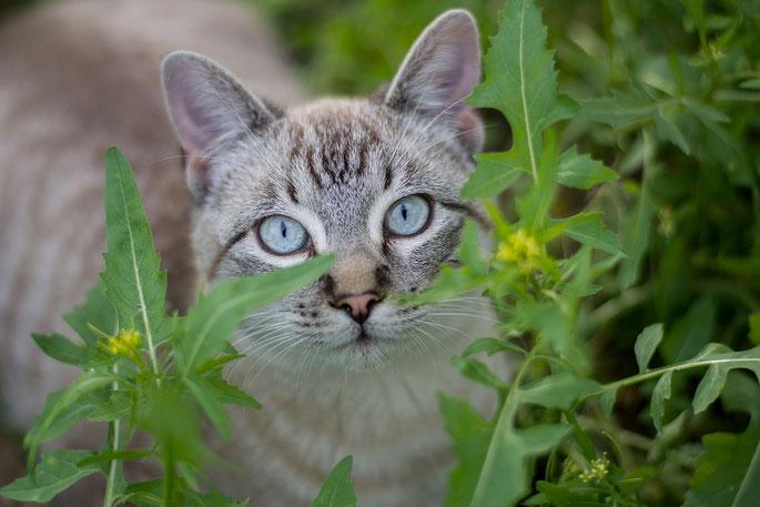 zufriedene Katze Glückliche Samtpfote