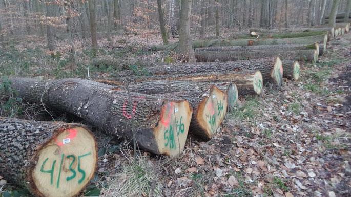 Forstwirtschaft Thüringen, Foto BI Pro Ettersberg