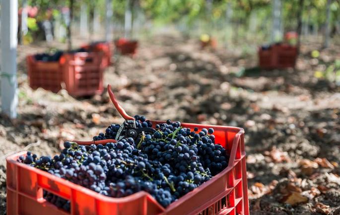 Vino di Puglia in Bag in Box