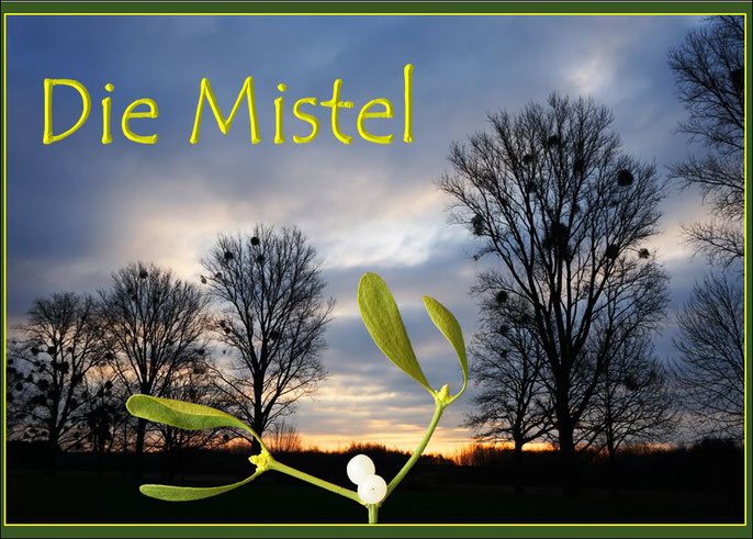 "Titelseite der Power-Point-Präsentation ""Die Mistel"""