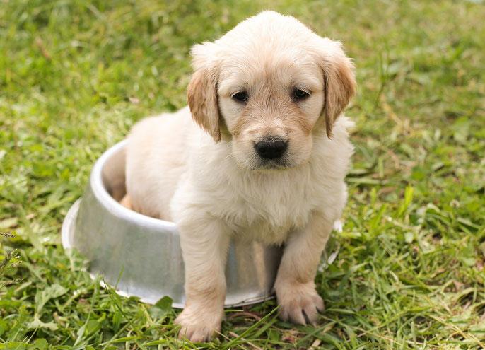 Welpenspielzeug, Welpen, Tipps für Hundehalter