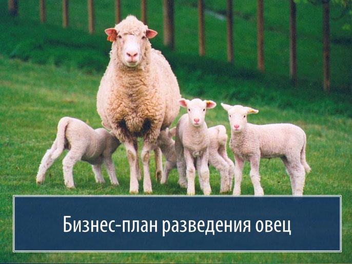 БИЗНЕС ПЛАН ПО ОВЦЕВОДСТВУ ГОТОВЫЙ СКАЧАТЬ БЕСПЛАТНО