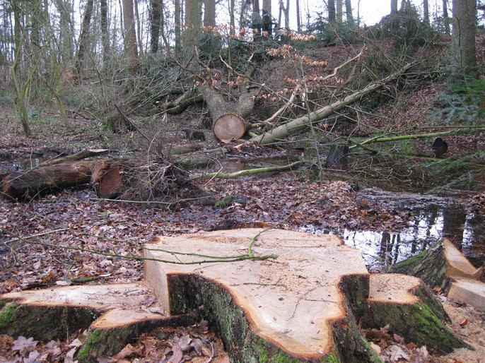 Multifunktionale Forstwirtschaft in Deutschland