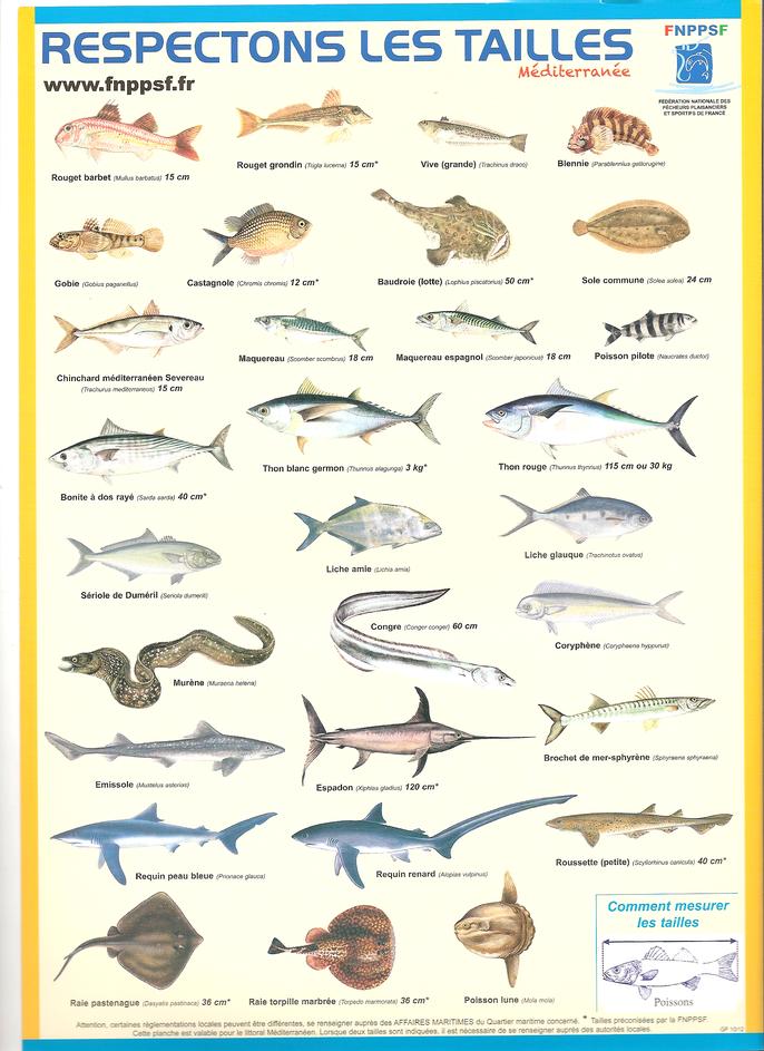 Pour une pêche durable, respectons les tailles minimales de prise des poissons. La SMPP 66470 partenaire de la SNPPSF.
