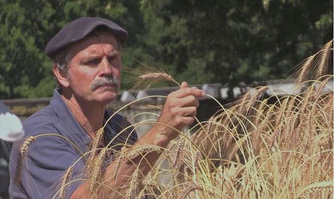 """une sélection à portée des paysans, et à l'écoute des plantes (image film """"Semences du Futur"""")"""