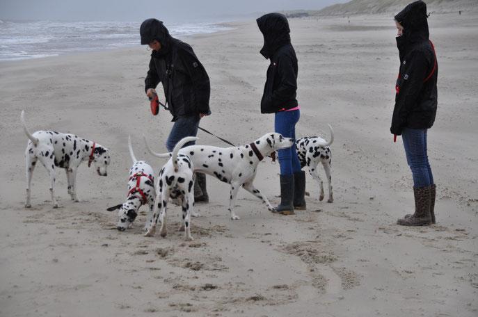 Punktetreffen am Strand: Wir treffen auf Bloom, Alice und Popey und ihre Zweibeiner!