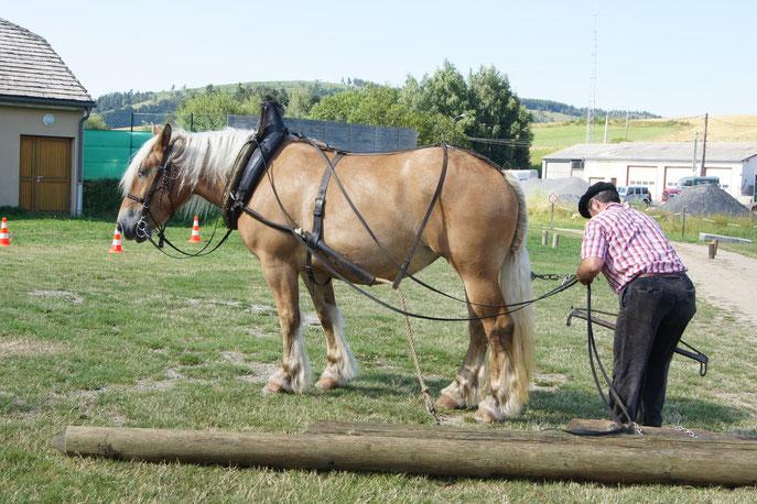 SLECTTA - débardage à cheval