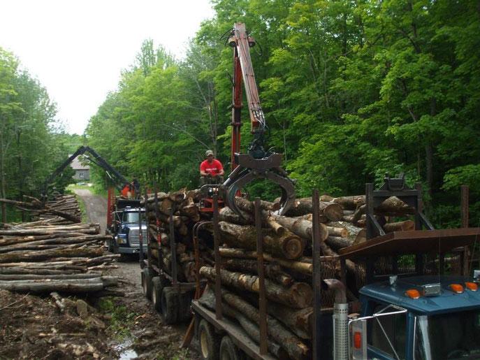 Transport forestier, camion 10 roues avec chargeuse avec trailer