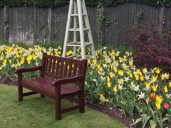 Visite du parc de la tulipe. Magnifique !