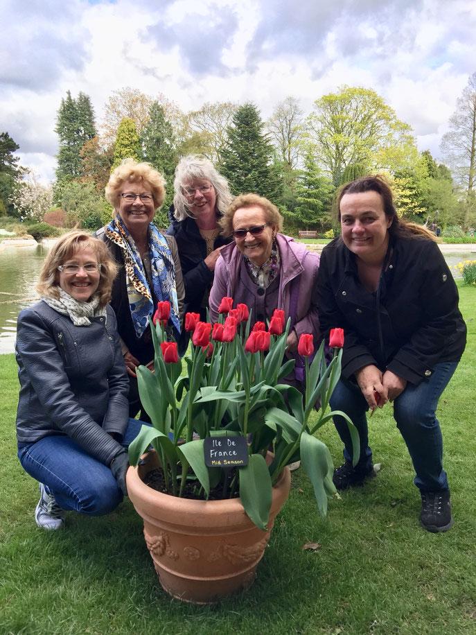 """Voici les plus belles tulipes """"Ile de France""""..."""