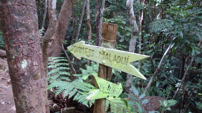 Forêt des Koghis (Nouvelle-Calédonie, A. Renaud)