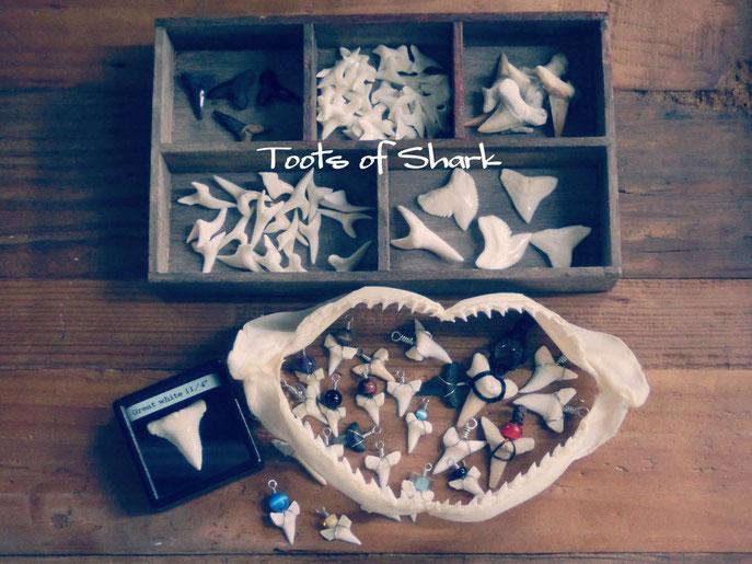 サメの歯でアクセサリーを作ろうワークショップ