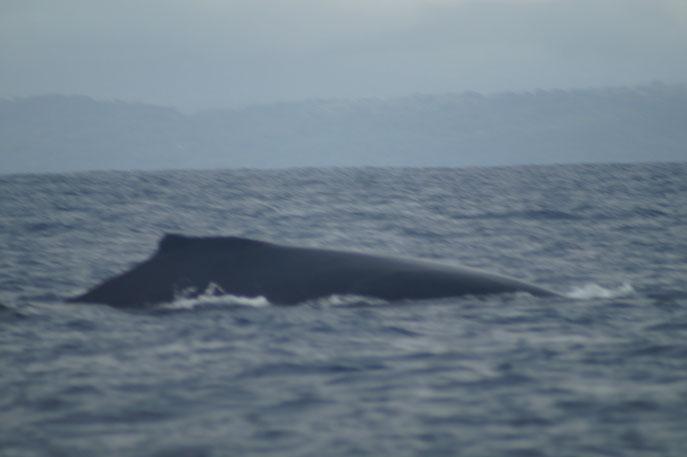 Ui, der Buckel eines Buckelwals!