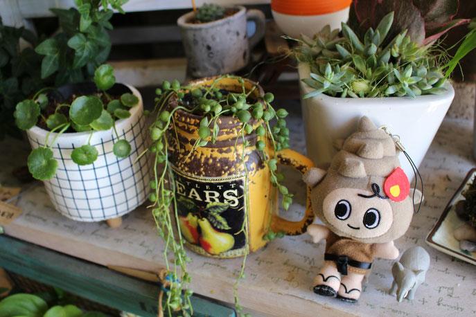 島根県大田市サザンクロスの多肉、観葉植物