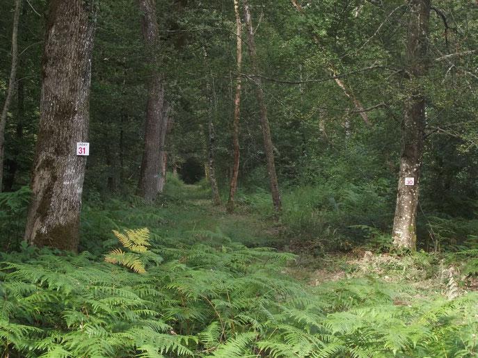 En forêt de Chaux (Banlieue de Dole, Jura).