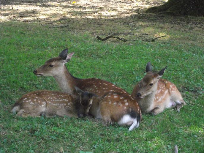 Au parc animalier des Vernaux (Tavaux Jura).