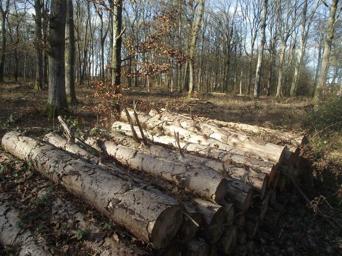 En forêt de Chaux (Dole, Jura, ville natale de l'auteur). Seconde forêt de France avec 20 493 ha.
