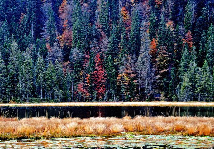 Naturschutzgebiet: Der Große Arbersee