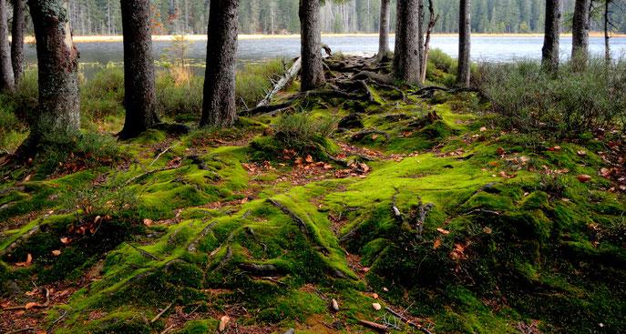 Herbst bei uns im Wald