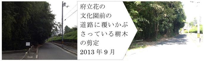 府立花の 文化園前の 道路に覆いかぶさっている樹木の剪定