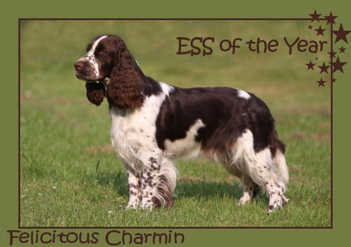 Felicitous Charmin Springer des Jahres 2013