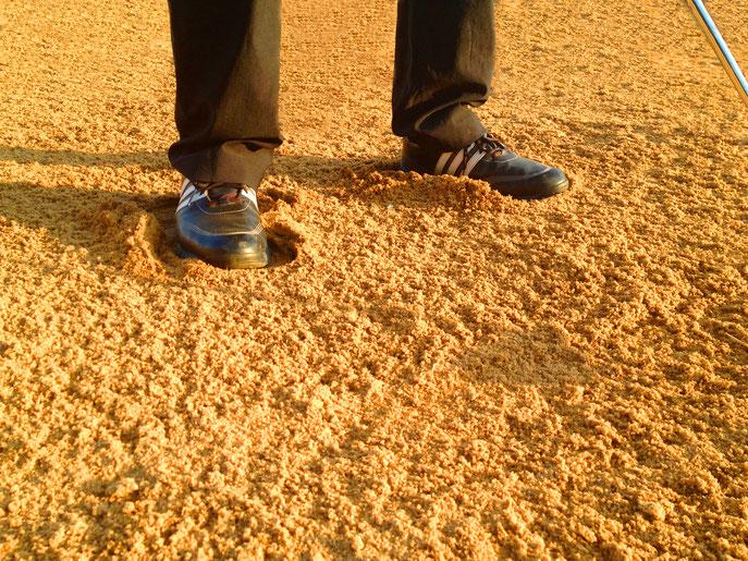 """""""Füße eingebuddelt"""": Um einen besseren Stand zu haben, empfiehlt es sich die Füße einzubuddeln. - © Patrick Klemm"""