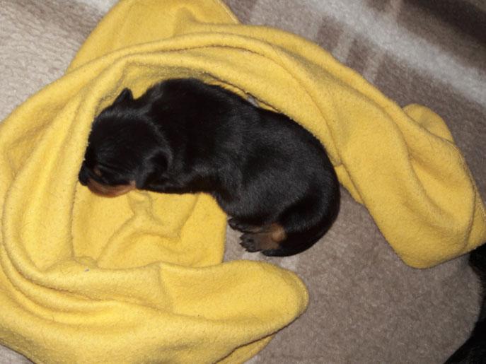 Und der Bub gibt sich mit einer Decke zufrieden.