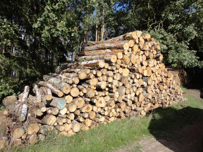 Birke Industrieholz