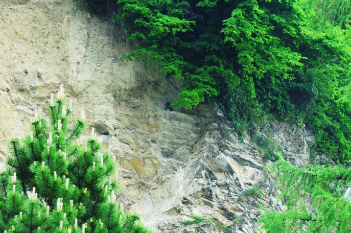 Uhu in einer Felswand. Leider nur etwas zu weit weg für meine Kamera