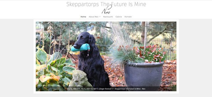 Flat-Coated Retriever Deckrüde Skeppartorps The Future Is Mine