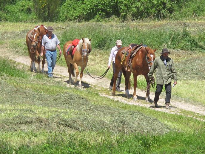 Gîte équestre Ardèche