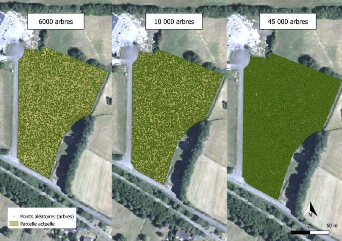La méthode Miyawaki consiste à planter une densité très importante de jeunes plants de façon aléatoire, proche de 3 arbres au m². Des forestiers de terrains estiment que 6000 pieds suffiraient amplement.  Réalisation : IGN/Nicolas Blanchard