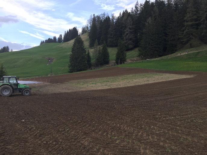 Gerste Hafer und der Weizen haben wir bei Top Bedingungen sähen können