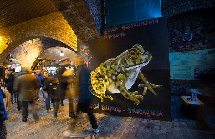 street art, Louis Masai, American Bull Frog