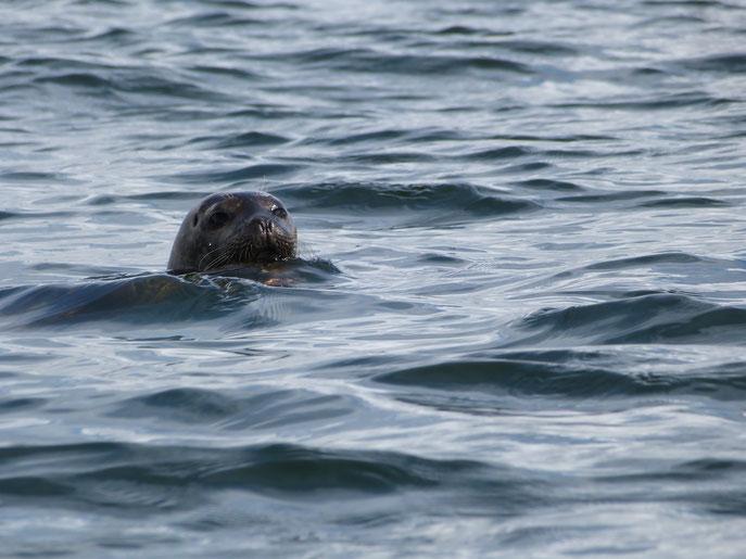 seal, the dower house, isle of islay, scotland
