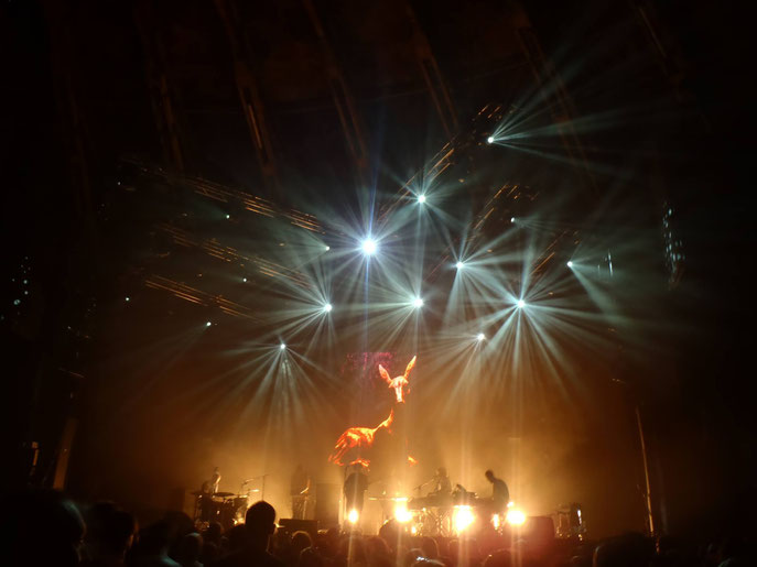 Junip in the Gashouder.