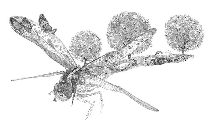 Olivier Marc Thomas Leger, Dragonfly, illustration