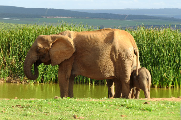 Addo Elephant National Park, South Africa