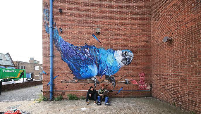 street art, Louis Massai, Baloo Spixs Maccaw