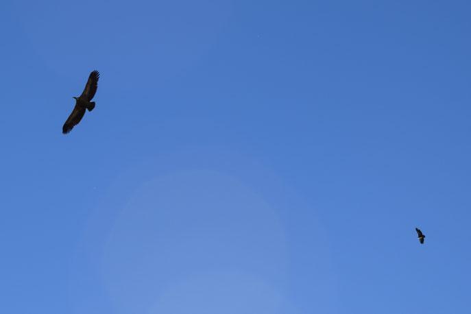 vultures, Ubrique