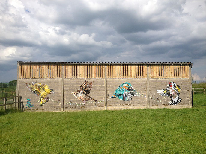 street art, Louis Masai, Siskin House Sparrow Kingfisher Goldfinch