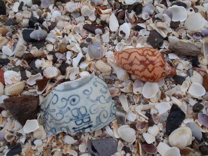 shells on Mui Ne beach, Vietnam