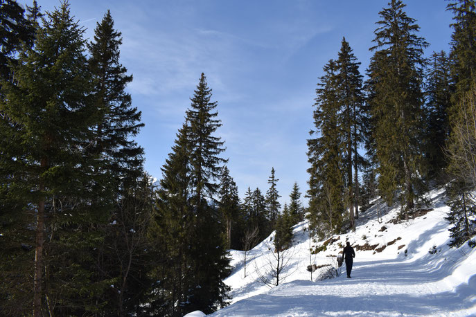 Winter snow, Morgins, Switzerland
