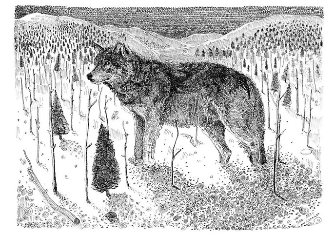 Olivier Marc Thomas Leger, Wolf Doodle, illustration