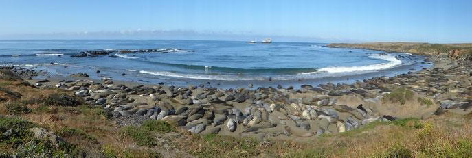 Plage réservée aux lions de mer